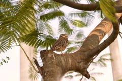Eule in einem Baum Stockfotografie