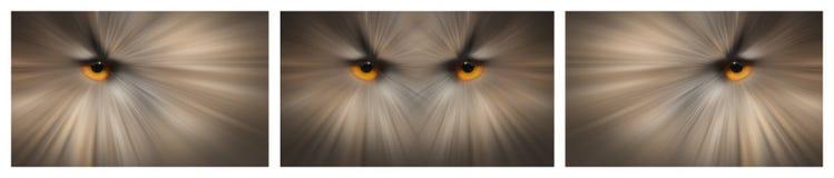 Eulen-Augen Stockfotografie