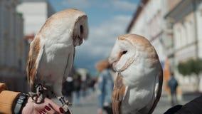 Eulenadler sehr nah oben, Detailgesicht, weißer Vogel des Makroporträts auf Straße stock footage