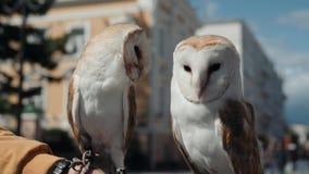 Eulenadler sehr nah oben, Detailgesicht, weißer Vogel des Makroporträts auf Straße stock video