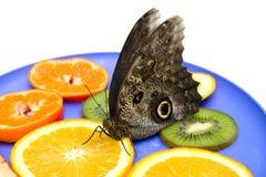 Eulenbasisrecheneinheit isst Früchte auf einer Platte. lizenzfreie stockfotos