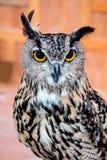 Eulenvogel Stockfoto
