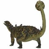 Euoplocephalus Dinosaur Tail Royalty Free Stock Image