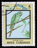 Euops di Aratinga, il ` cubano degli uccelli del ` di serie, circa 1983 Fotografie Stock