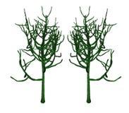 Euphorbia Royalty Free Stock Images