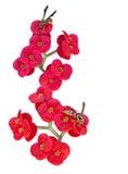 Euphorbia milii Stock Image
