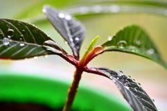 Euphorbias in pot Stock Photo