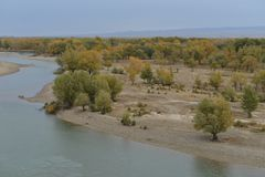 Euphrates Poplar Forests accanto al fiume Irtysh in Xinjiang Cina Fotografia Stock Libera da Diritti
