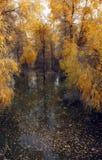 Euphratica do Populus: a árvore do herói no deserto de Taklimakan fotos de stock