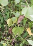 Eurasiático Reed Warbler en la vegetación Fotografía de archivo