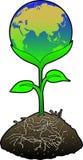 eurasia jordklotgreen Arkivbild