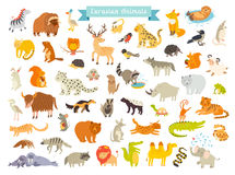 Eurasian animals vector illustration. The most complete big vector set of mammals in Eurasia Royalty Free Stock Images