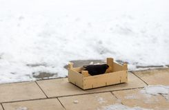 Eurasian Blackbird eating food poured into a wooden box in winter. Protection and love to nature concept. Space for text royalty free stock image