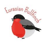Eurasian cartoon bullfinch isolated on white background Stock Image