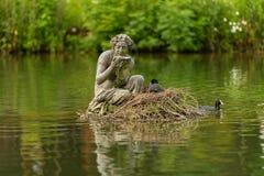 Eurasian coot on beautiful nest royalty free stock photo