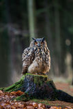 Eurasian Eagle Owl Bubo Bubo sitting on the stump, close-up, w. Beautiful wild owl in the nature Royalty Free Stock Images