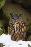 Eurasian eagle-owl Stock Photography
