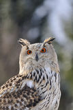 Eurasian Eagle Owl sitting in nature. With forrest in background Royalty Free Stock Photos
