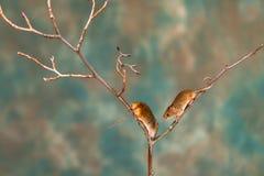 Eurasian harvest mice stock photo