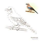 Eurasian jay bird learn to draw vector Stock Image