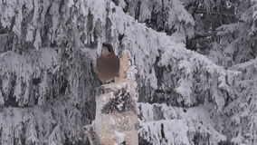 Eurasian jay perching on birch stump. By the snow covered birch tree stump feeder in overcast winters day stock video