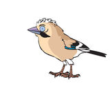 Eurasian jay toon Royalty Free Stock Photo