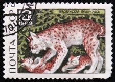Eurasian lynx Belovezhskaya Pushcha Reserve, circa 1969 Stock Image