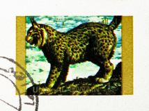 Eurasian Lynx (Lynx lynx), Rare animals; small format serie, circa 1972. MOSCOW, RUSSIA - NOVEMBER 10, 2018: A stamp printed in Umm Al Quwain shows Eurasian Lynx stock images