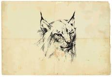 Eurasian lynx - pencil drawing to vector Royalty Free Stock Photos