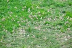 Eurasian Tree Sparrow Stock Photo