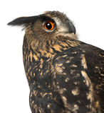 Eurasische Adler-Eule, Bubo Bubo, 15 Jahre alt Lizenzfreie Stockfotos