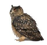Eurasische Adler-Eule, Bubo Bubo, 15 Jahre alt Lizenzfreie Stockfotografie