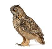 Eurasische Adler-Eule, Bubo Bubo Stockbilder