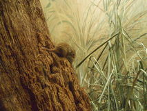 Eurasische Erntemaus stockfoto