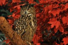 Eurasischer Eagle Owl gehockt auf einen Baum Stockfotografie