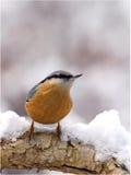 Eurasischer Kleiber im Schnee lizenzfreie stockbilder
