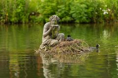 Eurasisches Blässhuhn auf schönem Nest lizenzfreies stockfoto