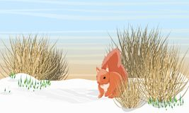 Eurazjatycka czerwona wiewiórka blisko rzeki w wczesnej wiośnie Roztapiający śnieg, śnieżyczki royalty ilustracja