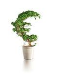 Euro albero crescente Immagini Stock
