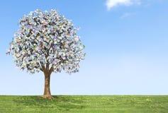 Euro albero dei soldi fotografia stock