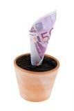 Euro-Anmerkung im Blumenpotentiometer. Zinssätze, Wachstum. Stockfotos
