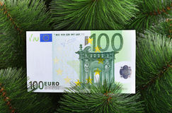 Euro banknote on green pine. Stock Photo