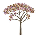 Euro banknote tree  isolated. Euro banknote tree isolated  on white Stock Photo