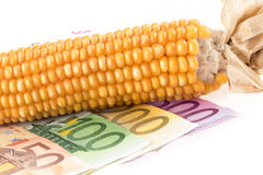 Euro banknotes with corn cob Stock Images