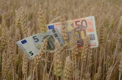 Euro banknotes money on ripe wheat ears in field. Agriculture business concept Stock Photos