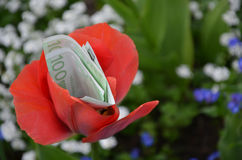 100 euro banknotes and tulip. 100 euro banknotes on a beautiful tulip Royalty Free Stock Photos