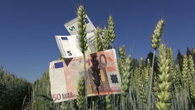 Euro banknotes on wheat fears – agriculture business concept stock footage
