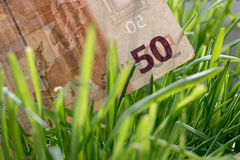 50 euro bill growing in the green grass, financial growth concept.  Stock Photography