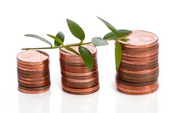 Euro cent coins and green sprout Royalty Free Stock Photo