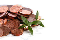 Euro cent coins and green sprout Stock Image